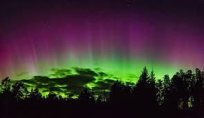 7 5 ft just cut ez light norway spruce aurora wikipedia