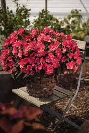 National Patios by 625 Best Patio Pots And Containers Images On Pinterest Flower