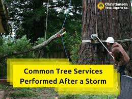 identifying a hazardous tree and the process of its removal