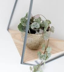 best image of wall mounted plant holder all can download all
