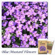 popular fall flowers for garden buy cheap fall flowers for garden