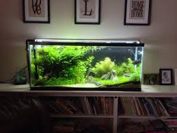 55 gallon aquarium light my 55 gallon high tech planted aquariums