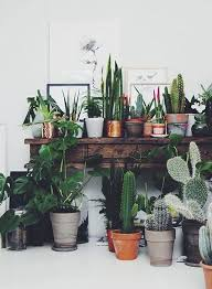 Cool Small Palnts To Grow The 25 Best Bedroom Plants Ideas On Pinterest Plants In Bedroom