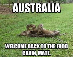 Straya Memes - australia welcome back to the food chain mate another day in