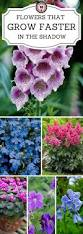 best 10 shadow plants ideas on pinterest shade garden shade