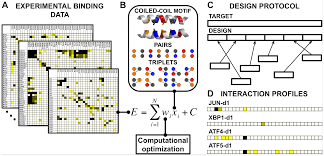 data driven prediction and design of bzip coiled coil interactions