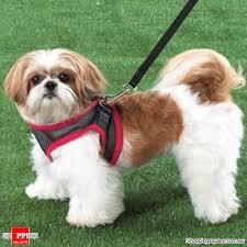 Comfortable Dog Comfy Control Dog Harness The World U0027s Most Comfortable Collar