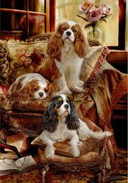 shop for cards cavalier king charles spaniel cards
