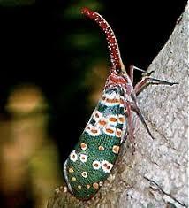 Rug Bugs 131 Best Arthropods Images On Pinterest Beautiful Bugs Beetles