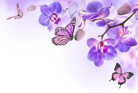 butterflies orchid flowers food