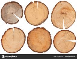 wood disk wood structure isolated wood disk stock photo piolka 164834070
