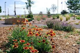 San Diego Landscape by California Drought Feeds Interest For Water Wise Landscaping In