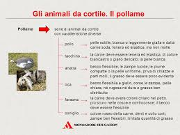 animali da cortile definizione pollame e animali da cortile gallery ebooks german and