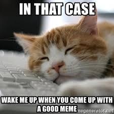 Sleepy Cat Meme - sleepy cat meme generator
