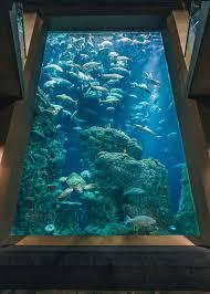 south carolina aquarium charleston area cvb