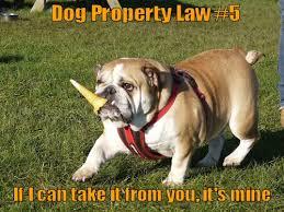 Law Dog Meme - dog property law 5