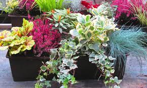 winterharte pflanzen balkon balkonpflanzen set für balkonkasten 60 cm lang balkon pflanzen