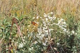 native prairie plants illinois illinois prairie palatine historical society