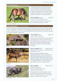 britain u0027s mammals a field guide to the mammals of britain and