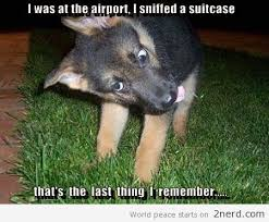 High Dog Meme - high dogs drug sniffing dogs high everything i like pinterest
