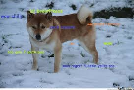 Doge Meme Original - doge in snow by patisnotaduck meme center