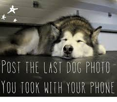 Dog Phone Meme - posi the last dog photo you took with your phone meme on sizzle