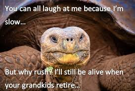 Funny Turtle Memes - 20 funny animal pictures and awesomeness kill the hydra