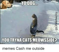 Yo Dog Meme - yo dog you tryna cats meowsside memes cash me outside meme on me me