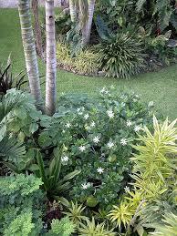 Tropical Fragrant Plants - 48 best tropical landscape images on pinterest best practice