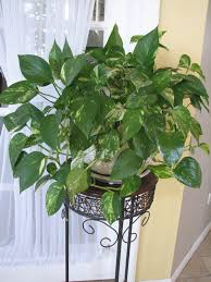 on the home front house plants
