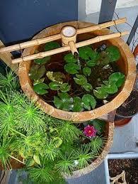 water garden container plants ideas patio dreams pinterest