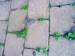 How To Lay Patio Pavers On Dirt by How To Keep Weeds From Growing In Pavers Get Rid Of Weeds