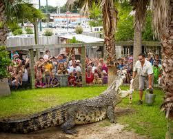 utan king of the crocs at alligator adventure north myrtle