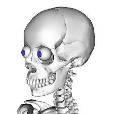 file anatomography skull and eyeball png wikimedia commons