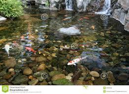 japanese koi fish pond stock photography image 3939502