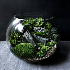 bio bowl forest world terrarium with live woodland plants 4