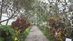 Botanical Garden Orchid Show New York Botanical Garden S Orchid Show Is Back And Bigger Than