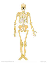 Anatomy Of The Human Body Bones Label The Human Skeleton K 5 Computer Lab