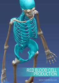 Which Cell Helps In Movement Of Bones Overview Of Skeleton Learn Skeleton Anatomy