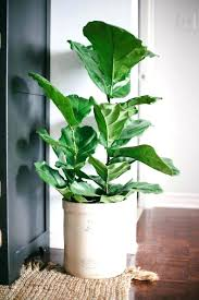 low light plants for office office plants no light low light loving houseplants perfect for