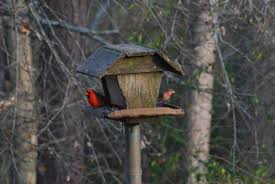 the nickajack naturalist january 2015