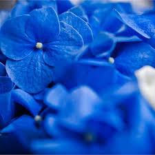 Blue Wedding Flowers Latest Blue Wedding Flowers African Bride