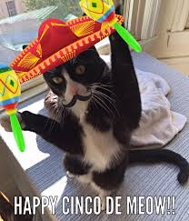 Meme Cinco De Mayo - cinco de mayo meme tux the dapper gent