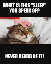 Sleepy Cat Meme - ask robocop17 you know it tu sabes meme memes sleepy