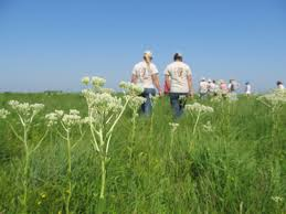 iowa native plant society kossuth county iowa natural heritage foundation