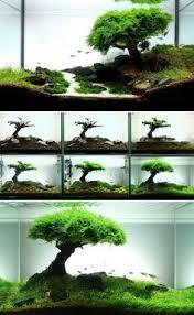 the basics of a planted aquarium planted aquarium aquariums and
