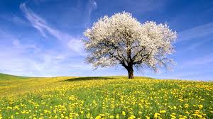 cool trees cool smart phone meadows flowers peace free fresh colored