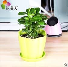 small potted plants amazon com office desk flowers small potted plants bonsai plants