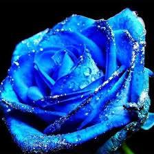 Imagenes Con Flores Azules Dia De La Maestra | mejores 58 imágenes de enviar flores ramos de flores rosas en