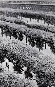 photographs of paris henri cartier bresson gardens of the palais royal paris france